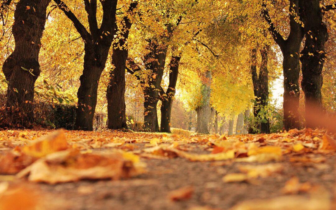 Jesienny urlop w Małopolsce: jakie atrakcje wybrać, co zwiedzić, gdzie się zatrzymać